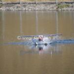 Wasserfliegen Damülser Stausee